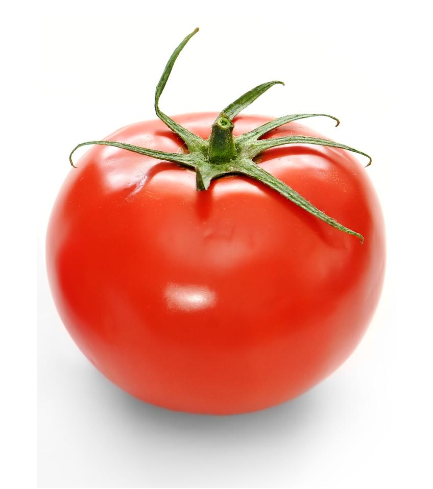 Petra F1, Tomate déterminée plein champ
